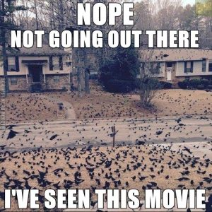 I've seen the film